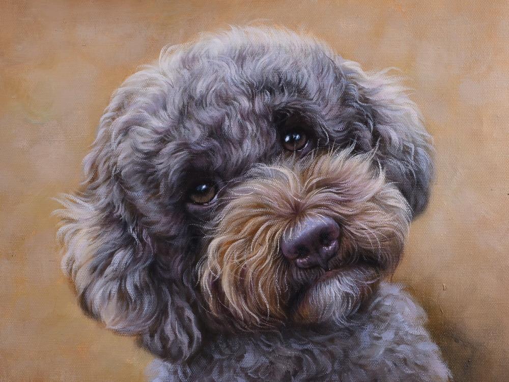 Schilderij labradoodle - hond